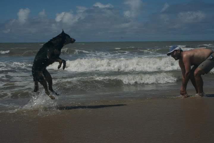 vacaciones con perros